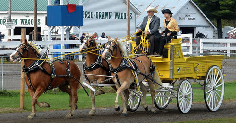 North Counry Draft Horses at Fryeburg Fair