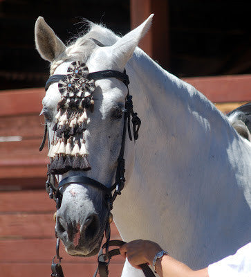 Nobel II - Photo Credit Braymere Custom Saddlery at braymere.blogspot.com