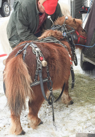 Buddy and Ben Lapointe at Skyline Farm Sleigh Day 2018