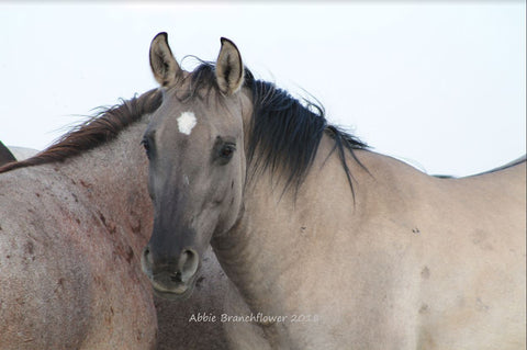 Brumby of the  Pryor Mountain Herd by Abbie Branchflower - Triple Mountain