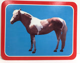 Postcards:  Chincoteague Pony Farm - Misty and more!