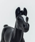 Arabian Foal. Black