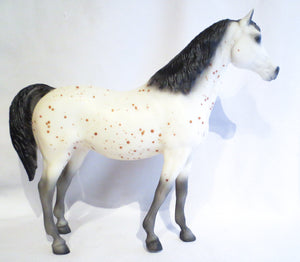 Family Arabian Mare ~ Ara-Appaloosa - triple-mountain