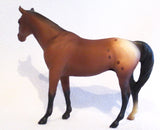 Citation, Bay Appaloosa - JC Penney SR - triple-mountain