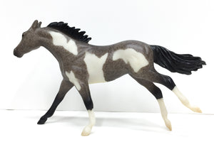 Thoroughbred, Blue (Black) Roan Pinto