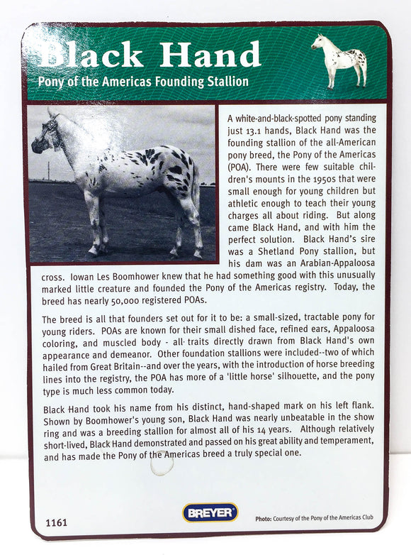 Pony of the Americas ~ Black Hand Bio Card