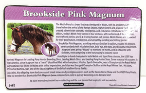 Bouncer ~ Brookside Pink Magnum Bio Card