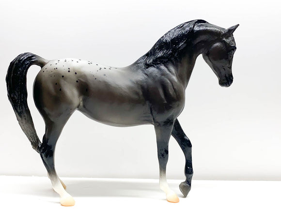 Johar, Black Appaloosa