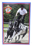 Breyerfest 2006 Postcard - Tommie Turvey with Joker & Ace