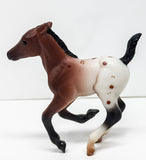 Cantering Foal, Bay Appaloosa - VARIATION?