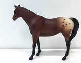 Citation ~ Bay Appaloosa - JC Penney SR - triple-mountain