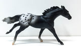 Thoroughbred, Black Appaloosa