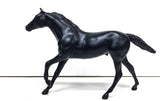 Thoroughbred ~ Cobalt