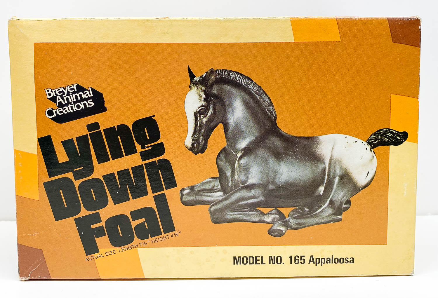 Box:  Lying Foal, Appaloosa