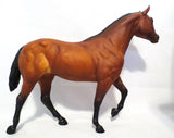 Stock Horse Stallion, Bay w/ Cardboard Box & Brochure