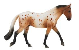 Irish Draft, Bay Appaloosa  - ADVANCE SALE