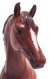 Warmblood Stallion ~ Chestnut Appaloosa