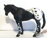 Appaloosa Stallion, Black Blanket Appaloosa - triple-mountain