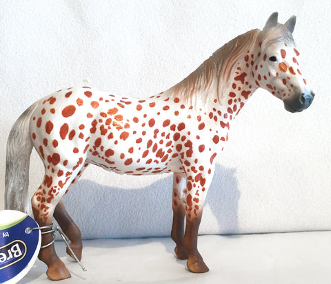 British Spotted Pony, Leopard Appaloosa