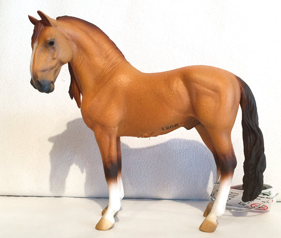 Campolina Stallion, Red Dun - triple-mountain