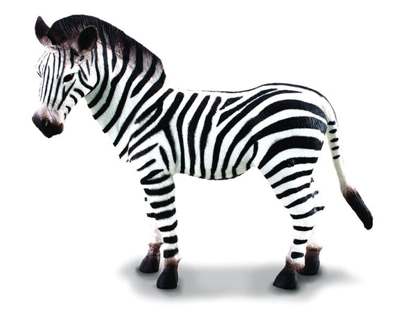 Zebra (Common Zebra)