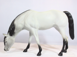 Grazing Arabian Mare, Light Dove Grey