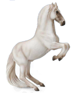 Lipizzaner Stallion, Grey