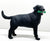 Black Labrador Retriever with Toy