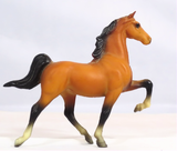 American Saddlebred, Bay w/ Black Points