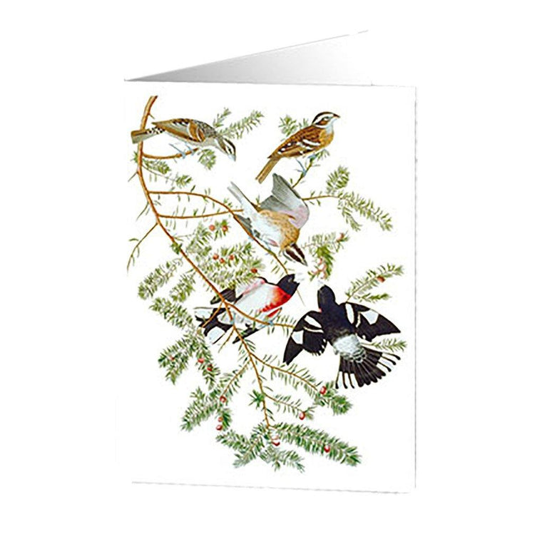 Grosbeak Holiday Cards