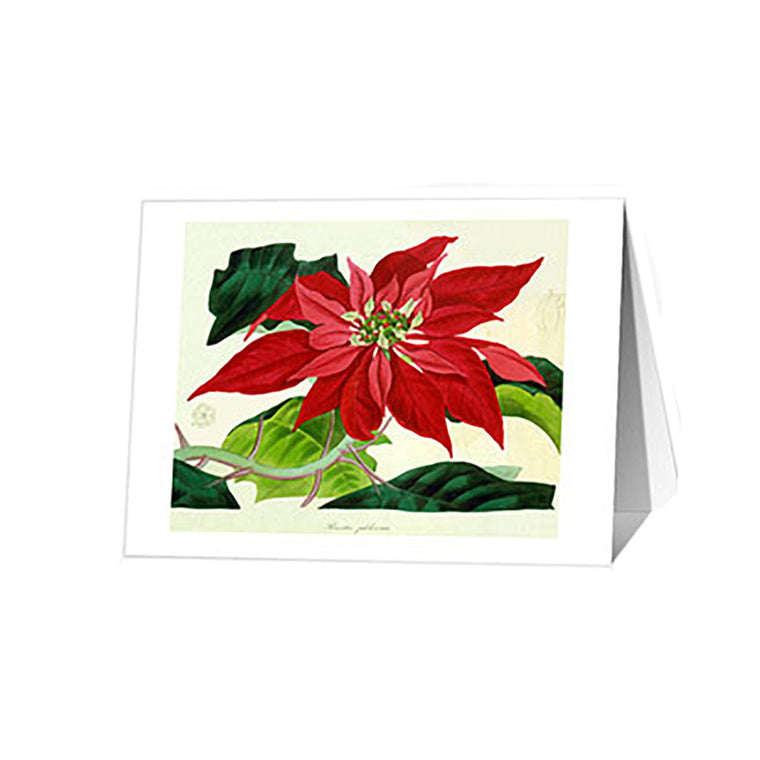 Poinsettia Holiday Cards