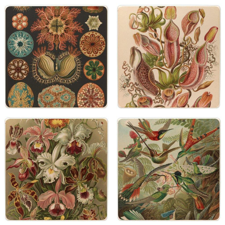 Haeckel Coaster Set