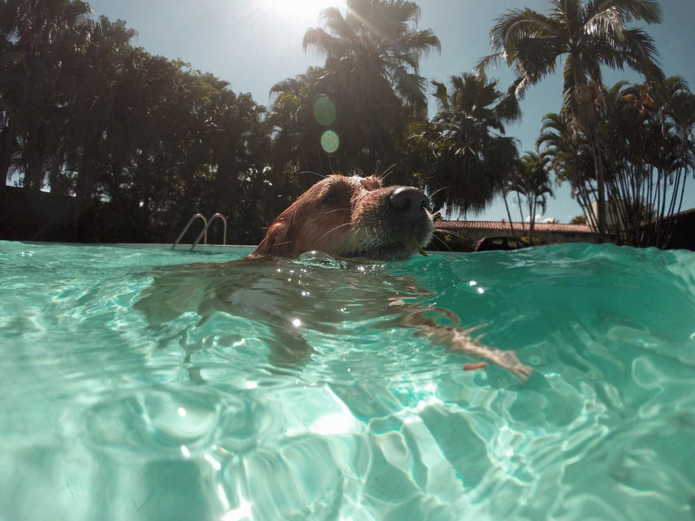 The Best Summer Tips for Your Doggo