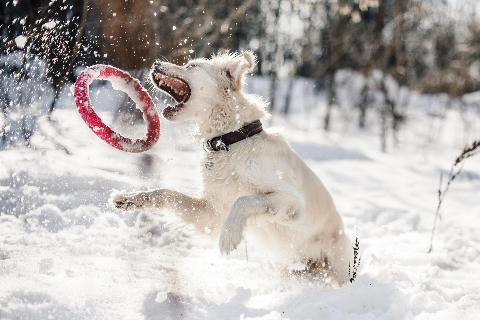 Toys and Other Products to Keep your Doggo Happy and Healthy
