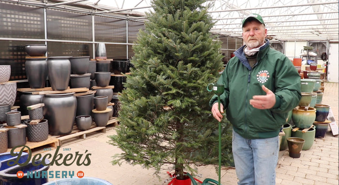 [VIDEO] Christmas Trees 101 with Conrad Decker from Decker's Nursery