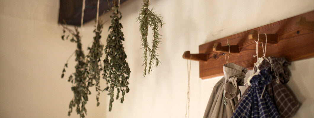 How to harvest and dry culinary herbs