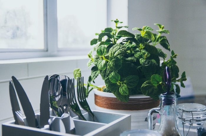 Everything a Beginner Should Know About Decorating with Plants