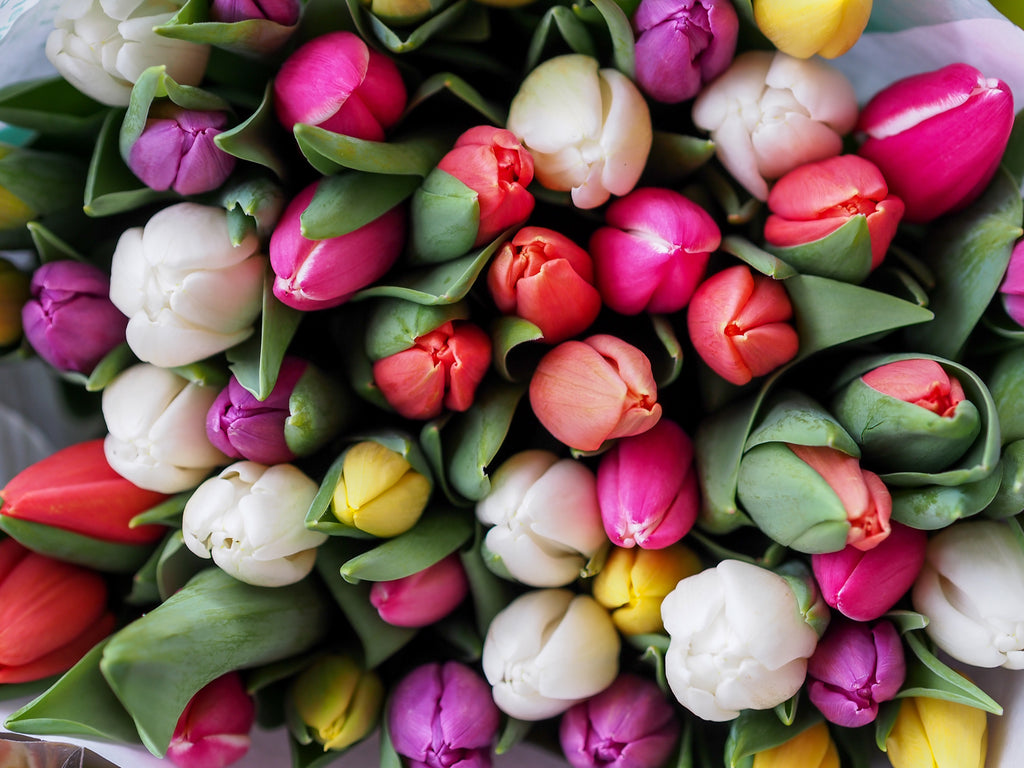 How To Care For Easter And Passover Plants That You Receive As A Gift