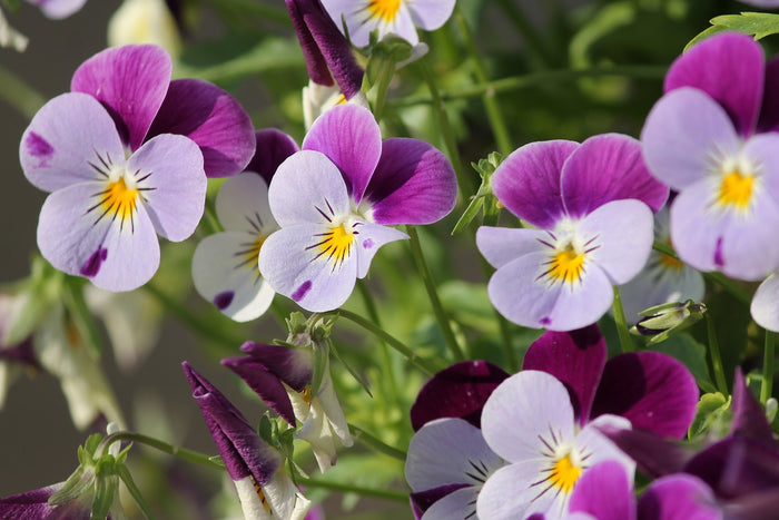 Using Spring Annuals