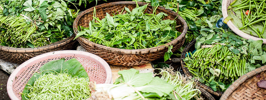 13 easy to grow and use herbs