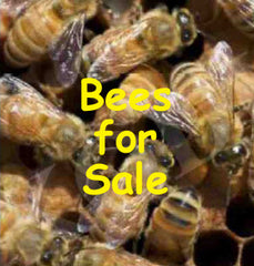 bill s bees news 2015