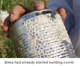 Bill's Bees started building comb