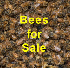 Bill's Bees Bees for Sale