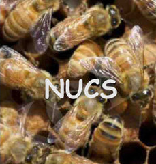 Bill's Bees Bees in Nucs