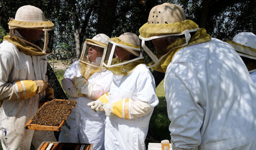 Bills Bees teaches Beekeeping Classes for LA County Beekeepers Assoc