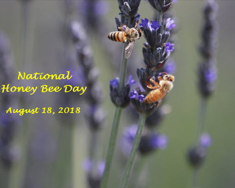 Bill's Bees 2018 National Honey Bee Day