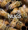 Bees in Nucs
