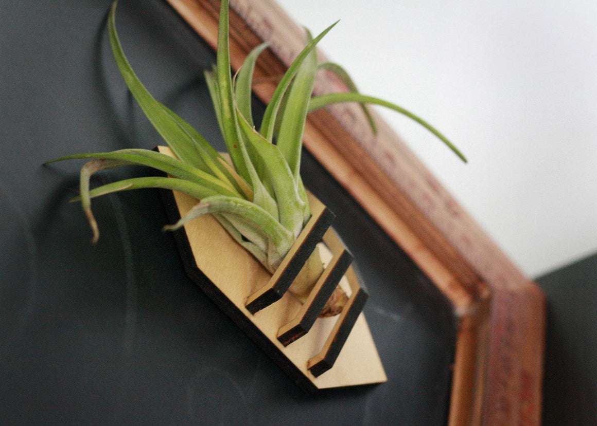Air Plant Vase - Geometric Air Plant Vase (magnetic mount) -  - District 31 - 1