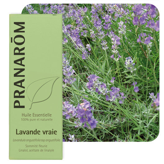 TRUE LAVENDER - Essential Oil