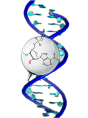 Double Stranded DNA  (dsDNA)- 10-251-407603